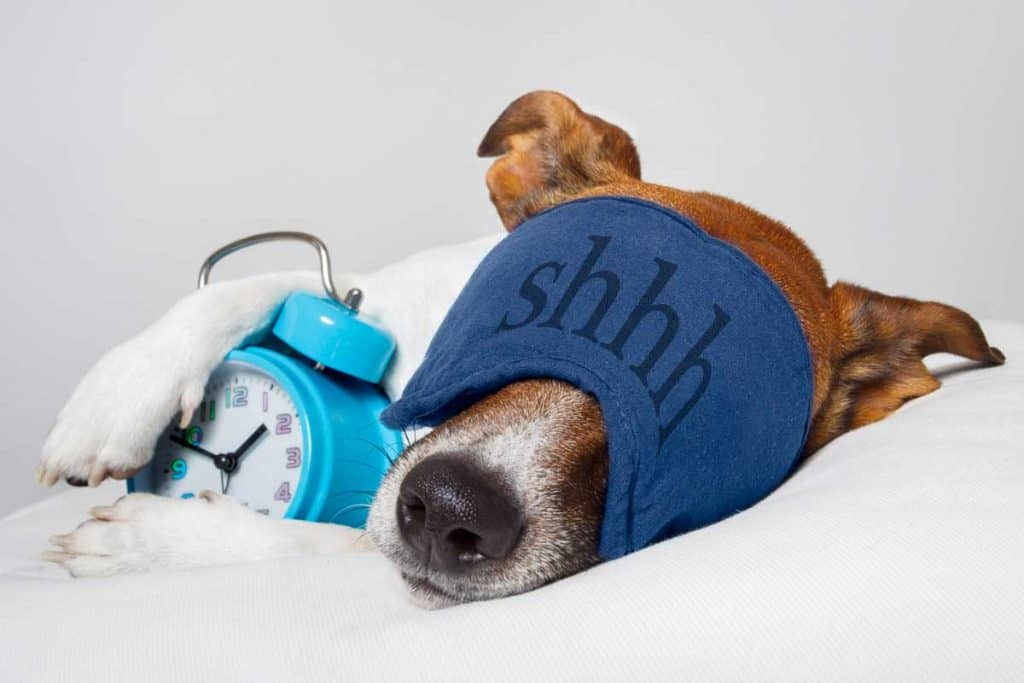 dog wearing sleep mask and holding alarm clock